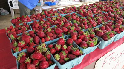 Strawberry-festival-florida