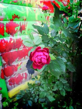 1507_Garten 029 Kopie_K