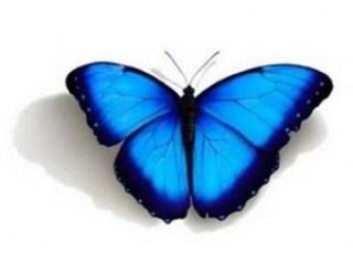 la mariposa azul simboliza la pérdida perinatal