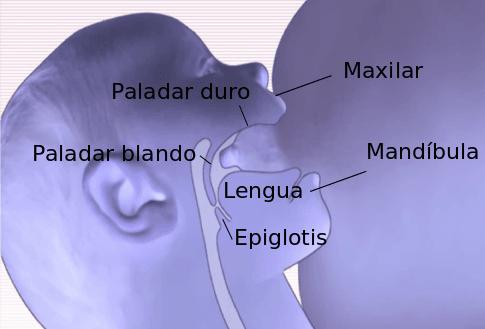 anatomia-succion-compressor