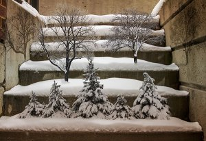 Image of Light Painting Bonsai Winter