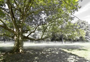 Image of Light Painting Kernel Sycamore