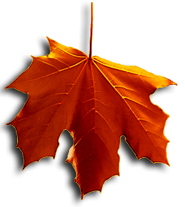 Image of Red Falling Leaf is on the Homepage.