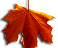 Image of Red Falling Leaf