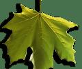 Image of Green Falling Leaf