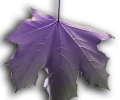 Image of Purple Falling Leaf