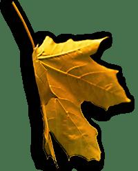 Image of Orange Falling Leaf is on the Homepage.