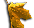Image of Orange Falling Leaf
