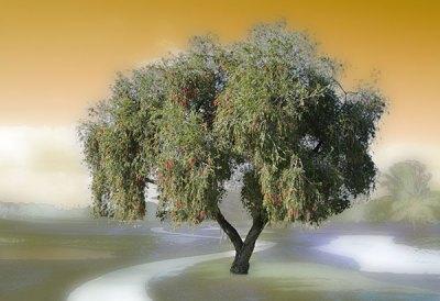 Sorcerers Tree