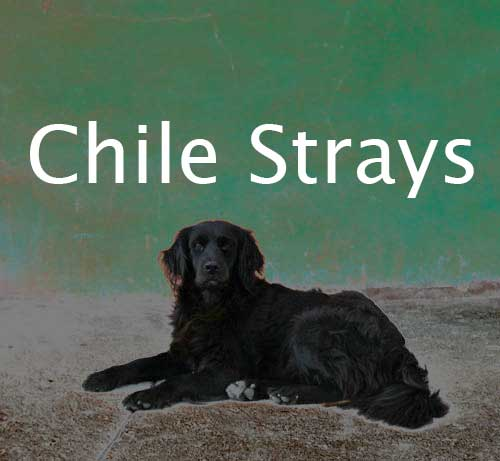 chile-dogs-label