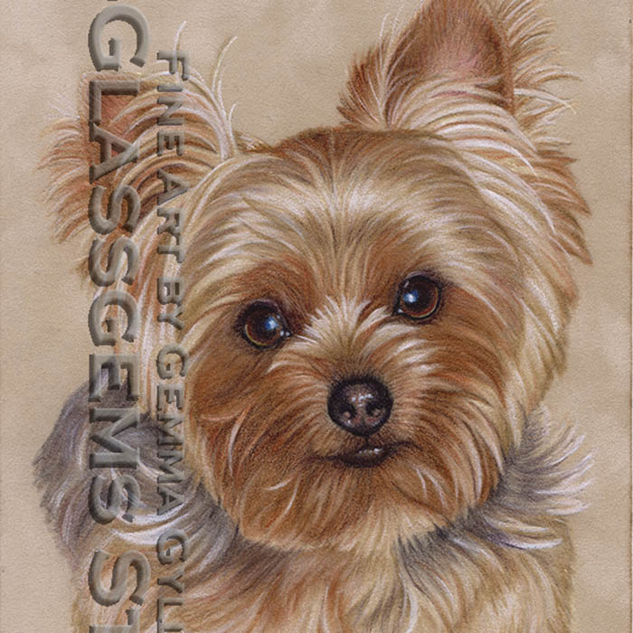 """Chico"", Yorkshire Terrier, colored pencil on suede mat board, 10"" x 7"""