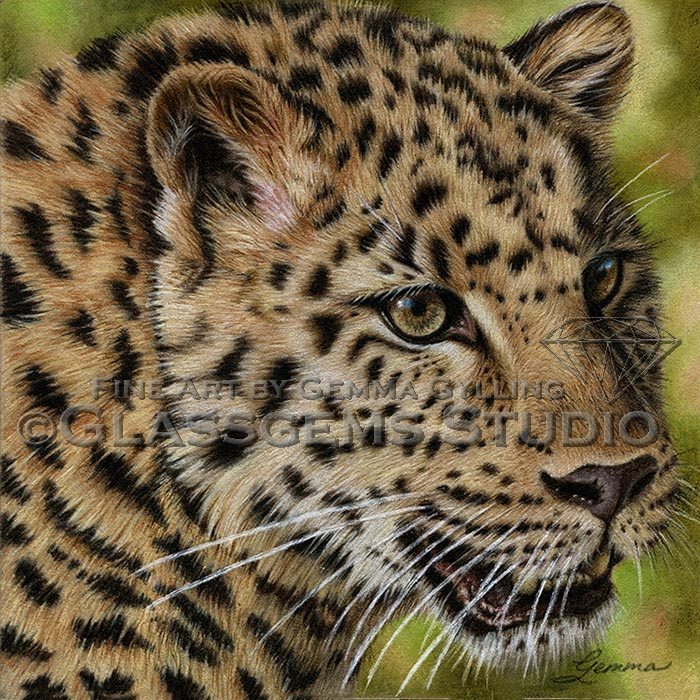 """Critically Endangered"", Amur Leopard, colored pencil on suede mat board, 8"" x 8"""