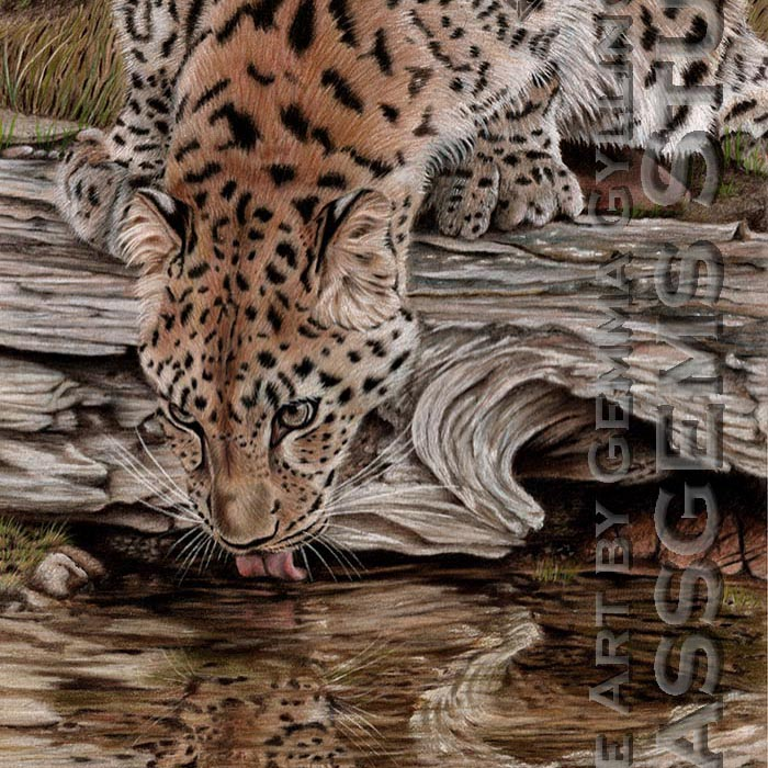 """""""Endangered Reflections"""", Amur Leopard, colored pencil on suede mat board, 22"""" x 12"""""""