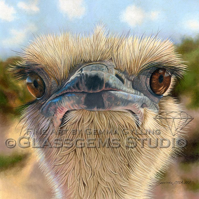 """""""Here's Lookin' at Ya!"""", Ostrich, Colored Pencil on UArt sanded surface, 16"""" x 16"""""""