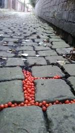 berry ginnel