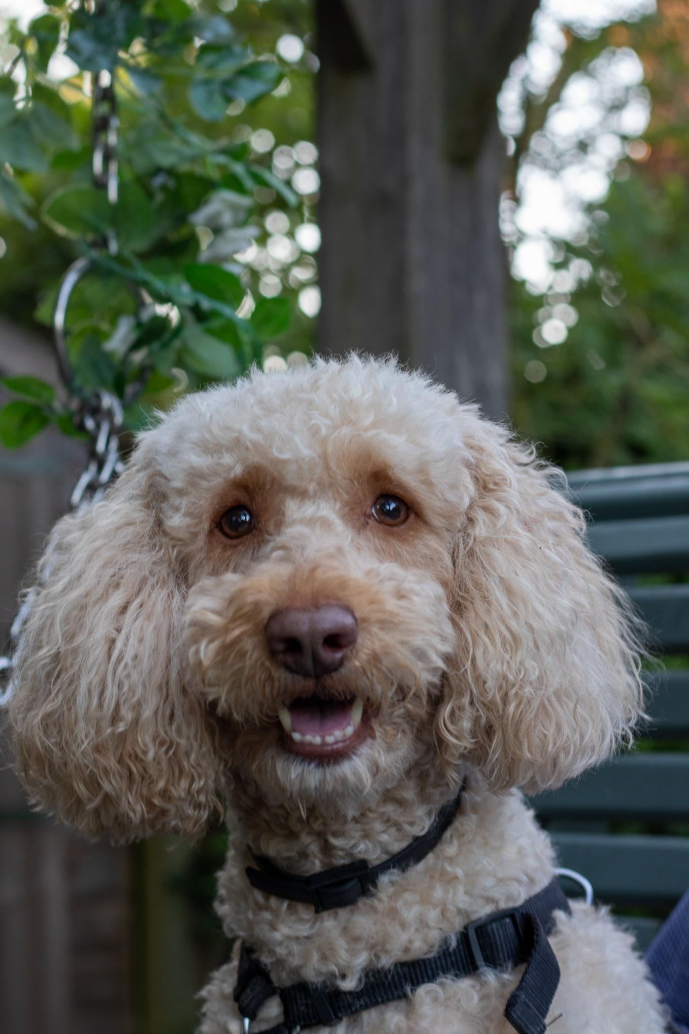 IMG 9836 - Griffon Forest: Dog Friendly Holidays