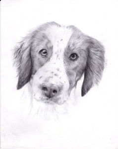 Pet portrait of a dog in pencil