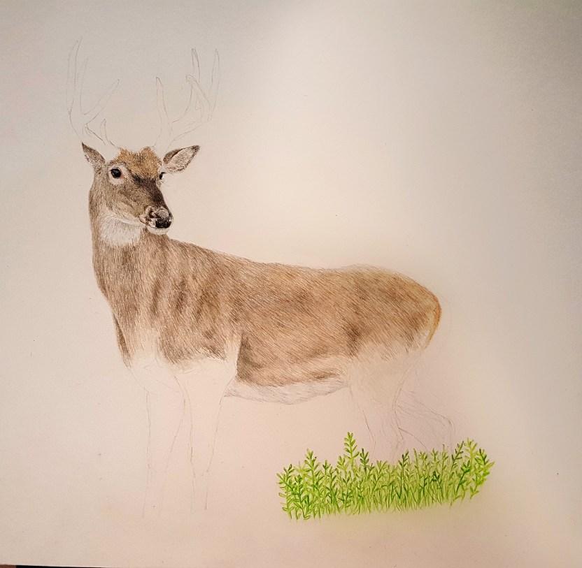deer work in progress