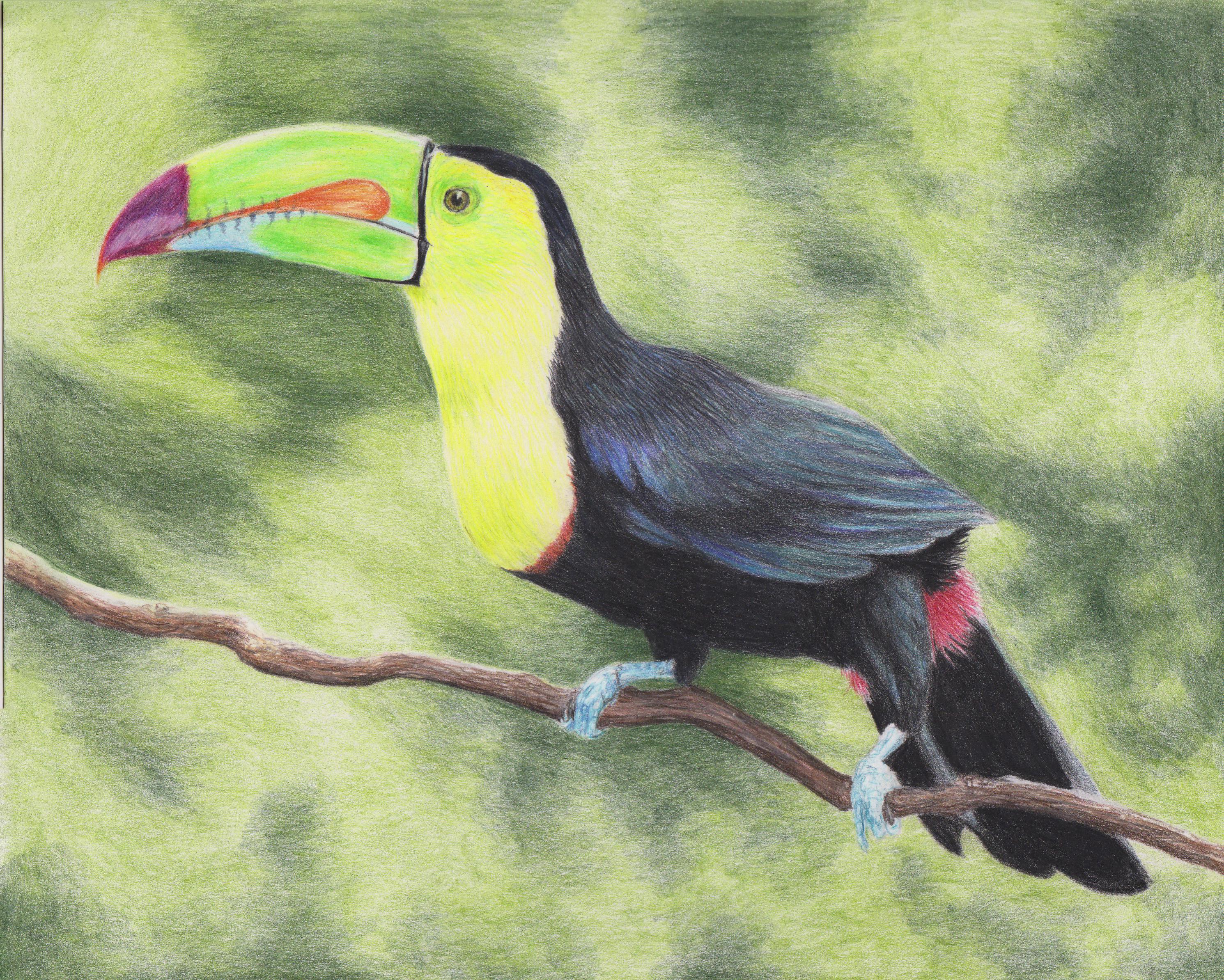 школы тукан птица рисунок халат многое