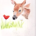 deer fawn drawing photo