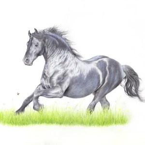 friesian horse fine art print