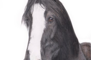 shire horse finished