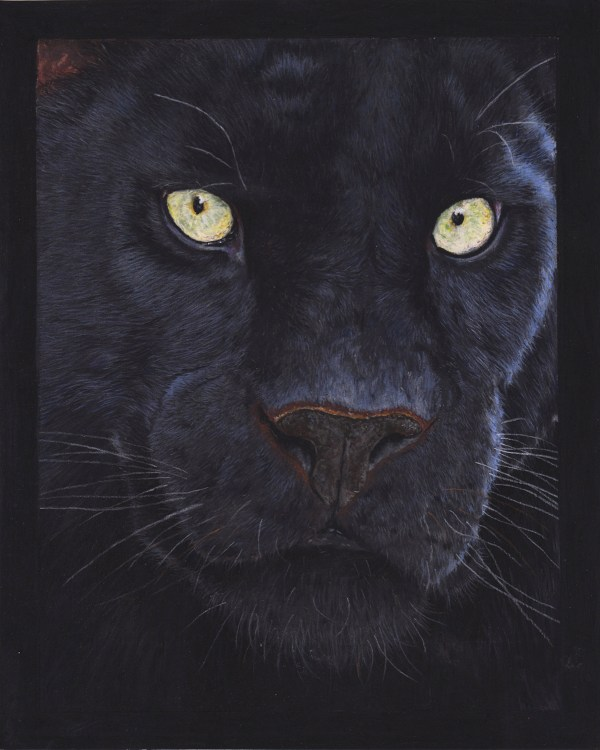 big cat drawing- black panther
