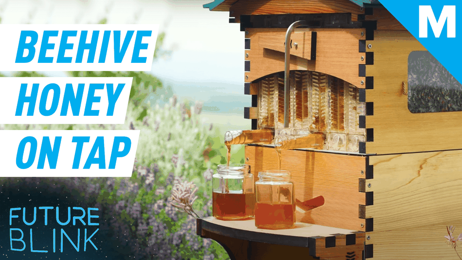 this-beekeeping-hive-harvests-the-honey-for-you-—-future-blink