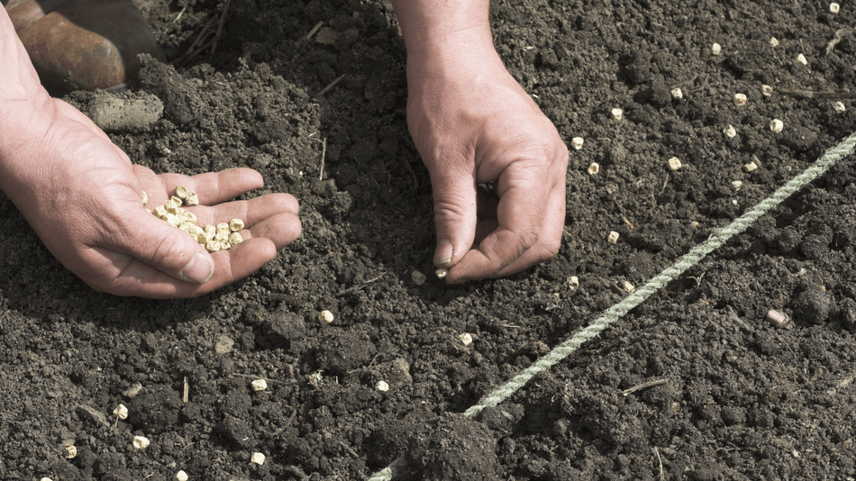 sorry-gardeners,-you-can't-buy-foreign-seeds-on-amazon-anymore