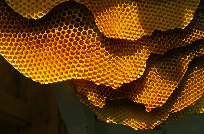 Honeycomb Structure - lattices can be found in nature