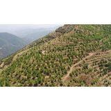 Photo of Köyler Gelir Getirici Ağaç Modeliyle Kalkınıyor