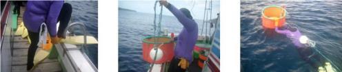 Ama diving from a boat, Yahataura Fishing Community,Iki Island, Nagasaki Prefecture, Japan. Photo: C. Lim.