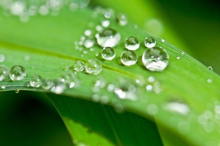 drip_dew_dewdrop_water_drop_of_water_leaf_halm_grass-969683.jpg!d
