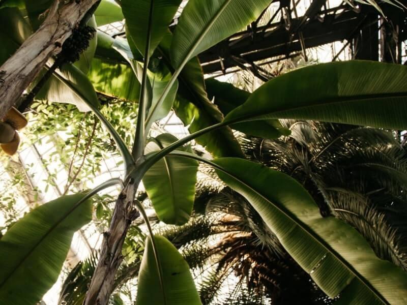 kerajinan dari pelepah pisang