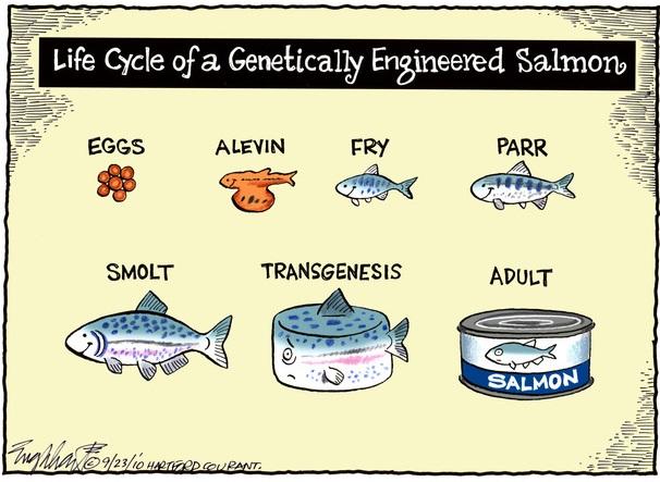 salmoncomics