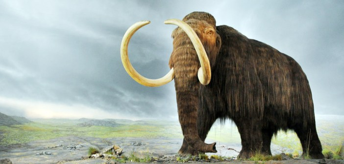 1024px-Woolly_mammoth1