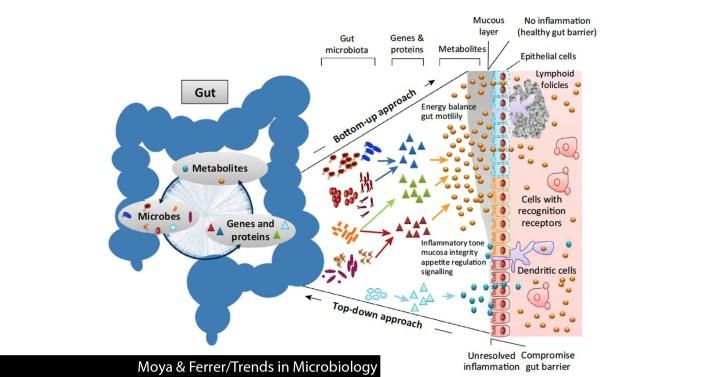 來源:http://www.gutmicrobiotaforhealth.com/en/gut-microbiome-stable-ever-changing/