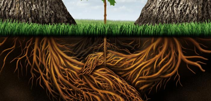 plantroot