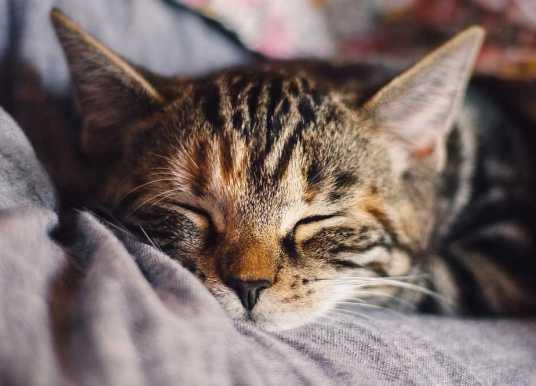 褪黑激素如何助眠?鉀離子通道是關鍵