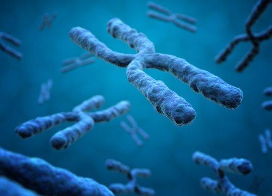 染色体可人工合成?线虫体内合成染色体助基因治疗