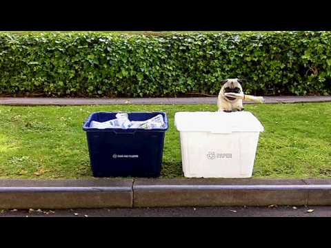 GREEN PUG RECYCLES! and changes lightbulb, carpools…