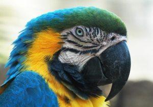 Parrot Head - GeneralLeadership.com