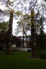 Thunderbird park 08