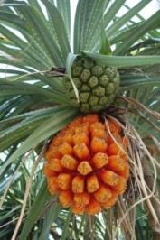 Arbre fruit