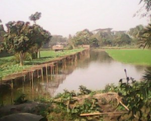 integrated shrimp aquaculture