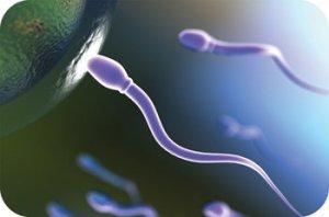espermatozoide-ovulo1