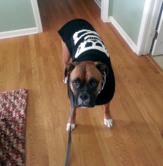Cody in Sweater