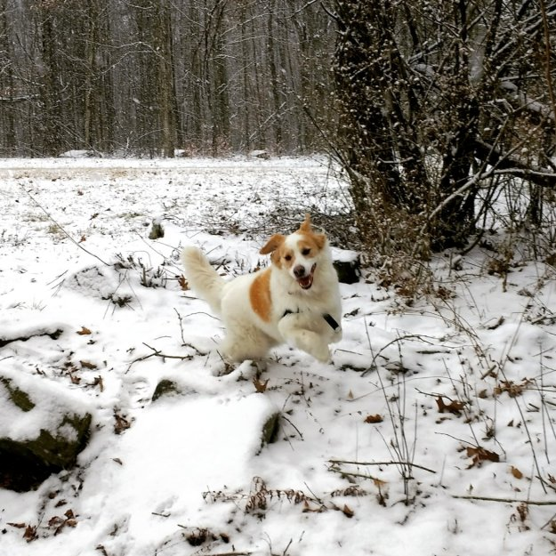 Dodger in Snow