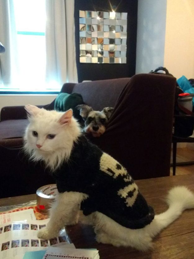Sheena in sweater