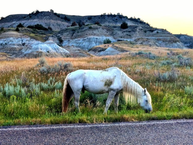 Wild Times at Theodore Roosevelt National Park 16